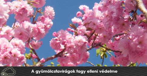 A-gyümölcsfavirágok-fagy-elleni-védelme